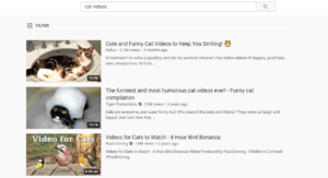 cat videos on youtube